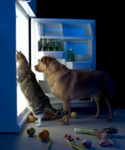 dog-cat-toxic-foods