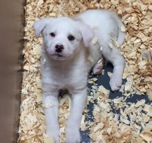 Puppy for adoption: Bruno