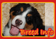 Puppy Breed Information